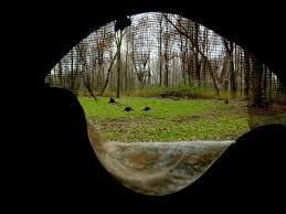 Ameristep Penthouse Blind Pop Up Deer Blinds Trapper Talk Trapperman Com Forums