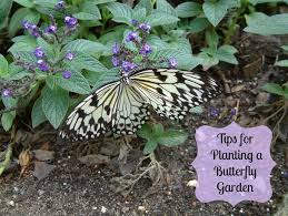 tips for planting a butterfly garden turning the clock back