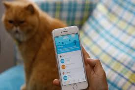 wearable tech latest must have for china u0027s proud pet owners