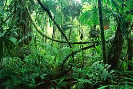 5 Dominant Plants In The Tropical Rainforest Virgin Forest Janezbozic U0027s Blog