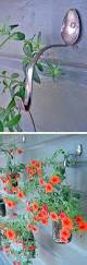 bird hooks home decor best 25 plant hooks ideas on pinterest solar lights for home