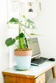 Plant For Desk Red Brick Magazine 4 Simple Goals An Update
