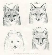 45 best fox images on pinterest foxes fox art and drawings