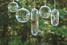 Decoration For Window Decoration Attractive Hanging Air Plant Garden Decoration For