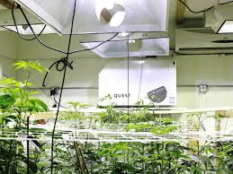 these are the best dehumidifiers for marijuana grow rooms