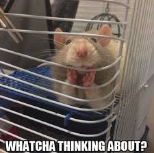 Mouse Memes - johnny 23 145 funny memes a collection of funny memes updated