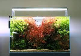 Mountain Aquascape Planted U2013 Aquarium Architect Custom Fish Tanks Sydney