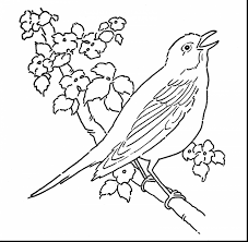 robin bird coloring pages coloring page
