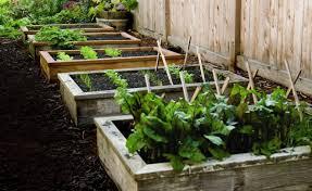 raised beds for vegetable gardens gardening flower and vegetables