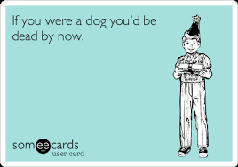 e cards the 50 best birthday ecards of all time