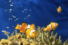 how many fish should i put in my saltwater aquarium