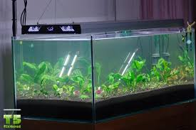 t5 fluorescent grow lights best aquarium lights t5 fluorescent lights t5 grow light fixtures
