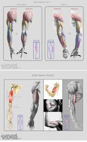 Anatomy Of The Shoulder Girdle Best 25 Forearm Muscle Anatomy Ideas On Pinterest Muscles Of