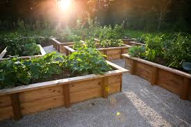 simple garden landscape rustic with vegetable gardens raised beds