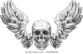 skull wings stock images royalty free images vectors