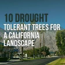 drought resistant plants for landscaping drought resistant