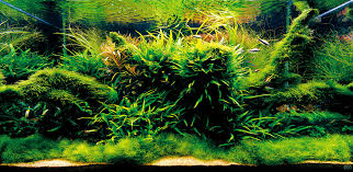 Aquascape Fish Getting Started With Aquascaping U2022 Aquascaping Love