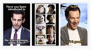 Cumberbatch Otter Meme - most people might be offended if they were being compared to an