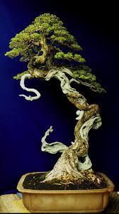 490 best bonsai tree inspiration images on pinterest bonsai