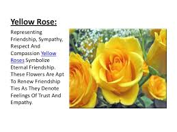 Meaning Of Pink Roses Flowers - rose its colors and numbers