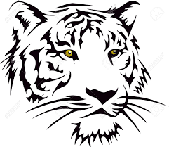white tiger designs ideas gallery