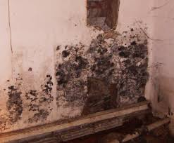 White Mildew In Basement 100 Remove Basement Mold Basement Water Damage And Mold