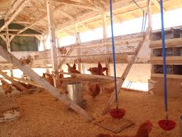 can you paint inside chicken coop with chicken coop wire inside or