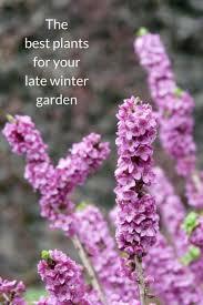 388 best jardin u0026 ecologia images on pinterest ap spanish