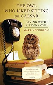 The Owl Barn Gift Collection Wesley The Owl The Remarkable Love Story Of An Owl And His