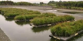 native aquatic plants uk bbc future nature u0027s water purifiers help clean up lakes