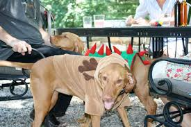 Vizsla Halloween Costume Dogs Design Vi Connecticut Country Dogs Live Luxe