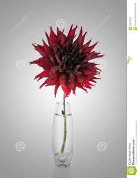 Red Flowers In A Vase Red Flowers In A Vase Best Flower Wallpaper 2017
