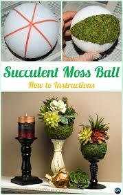 diy indoor outdoor succulent garden ideas instructions indoor