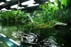 takashi amano u0027s floor in sumida aquarium tokyo album on imgur