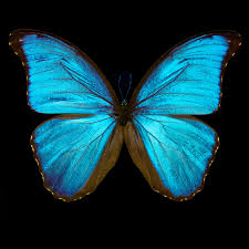 butterfly iii by heiko hellwig buy pictures photo