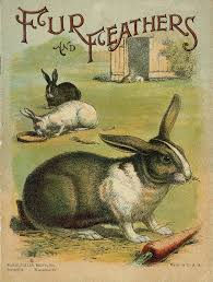 Emma Freud Rabbit Hutch 143 Best Rabbits And Hares Images On Pinterest Bunny Rabbits