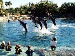Busch Gardens Family Package Top Florida Attractions Travelchannel Com Busch Gardens Tampa