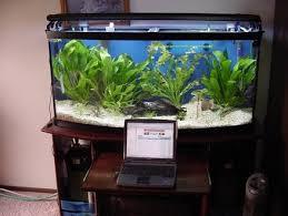 Aquarium Decorations Cheap Aquarium Stand 72 Gallon Bow Front With Laptop Drawer Giggity