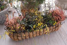 Plants For Winter Window Boxes - bwisegardening day 164 a window box party