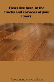 Laminate Floors And Pets Fleas That Are On Your Cat Or Dog Lay Eggs The Eggs Fall Off Your