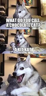 Kat Meme - what do you call a chocolate cat a kit kat meme