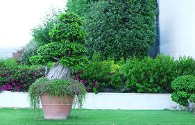 decor for patios and balconies ornamental trees and planters ebay