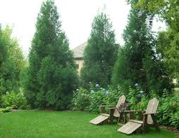 Backyard Trees Landscaping Ideas Backyard Trees Home Deco Plans