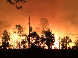 Wildfire Honey by Hernando County Wildfire Burns At Least 1 100 Acres Wfla Com