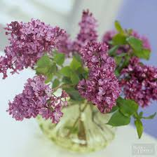 How To Revive Flowers In A Vase Is There Any Way To Keep Lilacs From Wilting In A Vase