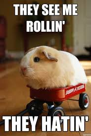 They See Me Rollin Meme - hamster wagon they see me rollin cute and cuddly boys