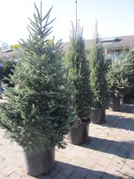 liveed trees illinois for sale delivered