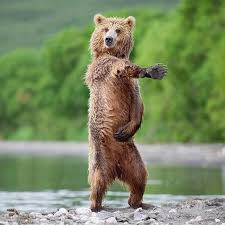 Smokey The Bear Meme Generator - meme template search imgflip