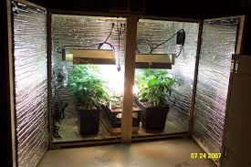 marijuana pinterest small indoor grow room find what home has all