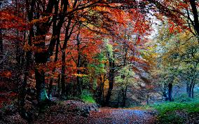 path trees colors view color fall leaves pretty grass